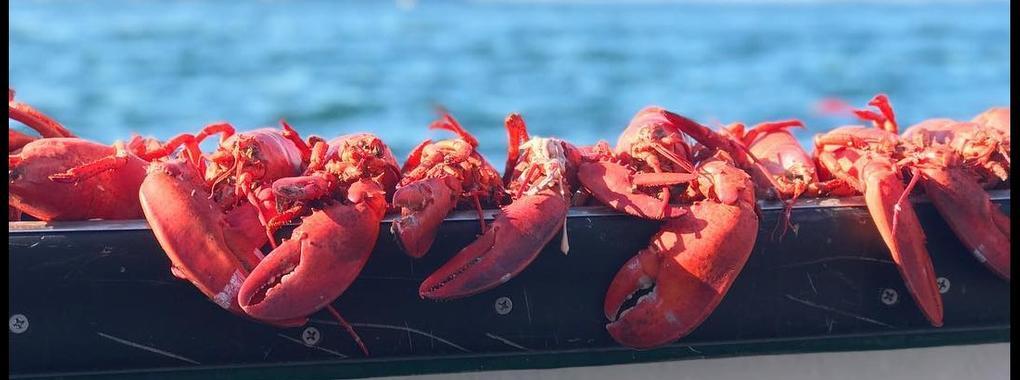 Lobster! Lobster! Lobster! Get Your Lobster Here!